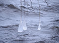 Free Beautiful Natural Ice Ornaments On The Trees Royalty Free Stock Image - 35599196