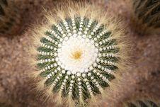 Close Up Of Globe Shaped Cactus Stock Photo