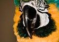 Free Parrot Portrait 4 Royalty Free Stock Photo - 3561195