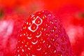 Free Detail Of Fresh Strawberry Stock Photo - 3561380