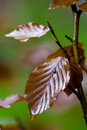 Free Wet Leaf Stock Photography - 3562922