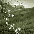 Free Flowering Royalty Free Stock Photos - 3565668