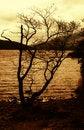 Free Autumn Gold Stock Photos - 3567613