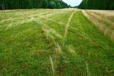 Free Mowed Meadow Stock Photos - 3560763