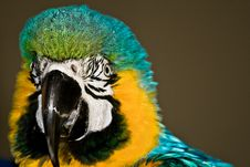 Free Parrot Portrait 2 Royalty Free Stock Images - 3561189
