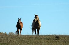 Free Two Horses And Blue Sky Stock Photos - 3562063