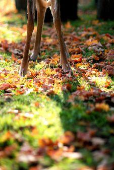 Free Deer Legs Stock Photos - 3562653