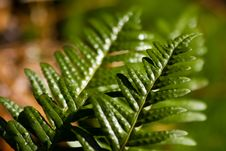 Free Green In Forest Stock Photography - 3562932