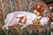 Sleeping Dog And Friends Stock Images