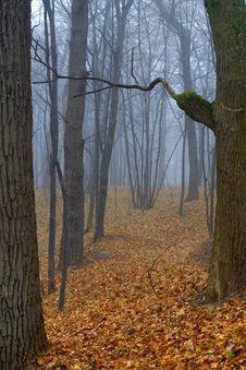 Free Foggy Wood Royalty Free Stock Photo - 3563315