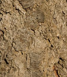 Free Fir Tree Bark Royalty Free Stock Photography - 3564637