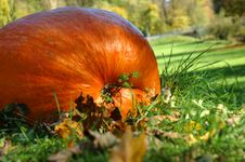 Free Pumpkin Royalty Free Stock Images - 3565979