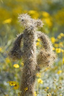 Free Mr. Jumpin Cholla Royalty Free Stock Photos - 3567068