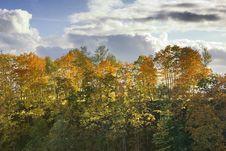 Yellow Autumnal Trees Stock Image