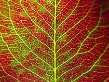 Free Detail Of A Leaf Stock Photo - 3568290