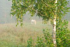 Free Pasture Stock Photography - 3568512