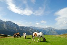 Free Pasture Royalty Free Stock Images - 3568709