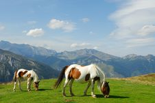 Free Pasture Stock Images - 3568754