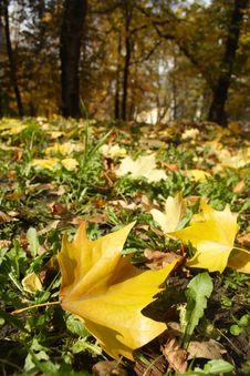 Free Autumn Leafs Stock Photo - 3569720