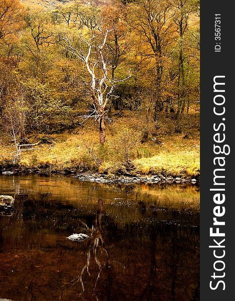 A Autumn reflection of a tree, Glen Lyon,Scotland,UK.