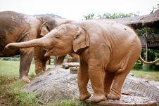 Free Baby Elephant Stock Images - 35601584
