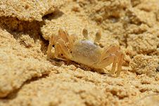 Tiny Crab Royalty Free Stock Images