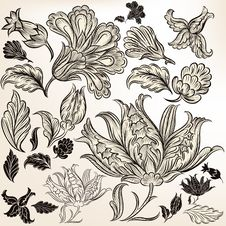 Collection Of Floral Hand Drawn Swirls For Design Stock Image