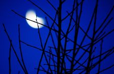 Free Blurred Moon Stock Photography - 35614422