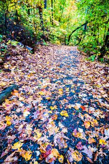 Free Autumn Country Road Stock Photos - 35619413