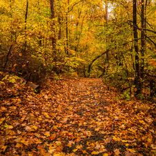 Free Autumn Country Road Stock Photography - 35619422