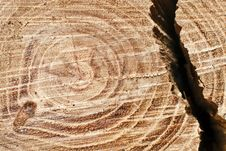 Free Cut Tree Trunk Stock Photos - 35621643