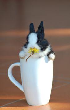 Free Bunny Mug Stock Image - 35622601