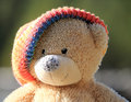 Free Portrait Of A Bear In A Cap Royalty Free Stock Photography - 35633247