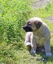 Free Charming Puppy Stock Photos - 35633773