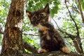 Free Heartwarming Tricolor Kitten Royalty Free Stock Image - 35633776