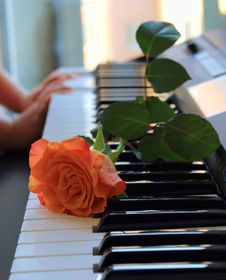 Rose On The Keys Royalty Free Stock Photo