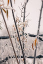 Free Autumn Leaves And Freezing Fog Stock Images - 35640194