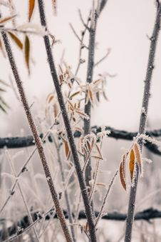 Free Autumn Leaves And Freezing Fog Stock Images - 35640194