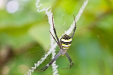Free Beauty Insect On Web In Forest Royalty Free Stock Images - 35643349