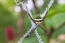 Free Beauty Insect On Web In Forest Stock Photo - 35643600