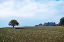 Free Lone Tree On The Field Royalty Free Stock Photography - 35646547