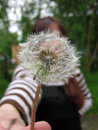 Free Girl With Dandelion Stock Images - 35651994