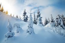 Free Snow In The Woods Royalty Free Stock Image - 35651326