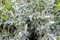 Free Green Vegetative Background Royalty Free Stock Images - 35650889