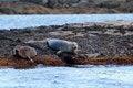 Free Seals Stock Photos - 35667173
