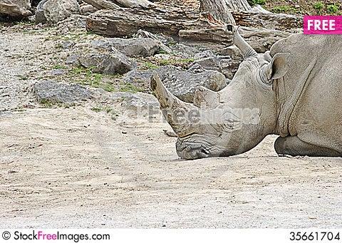 Free Rhinoceros Torso Stock Images - 35661704