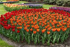 Free Flowerbed With Red And Orange Tulips. Stock Images - 35682584