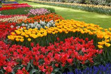 Free Beds Of Tulips. Stock Photos - 35683453