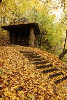 Forest Shelter Stock Image
