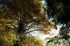 Free Trees View Upwards Stock Images - 3571494